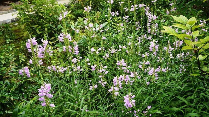 對應俳句的季節性花朵