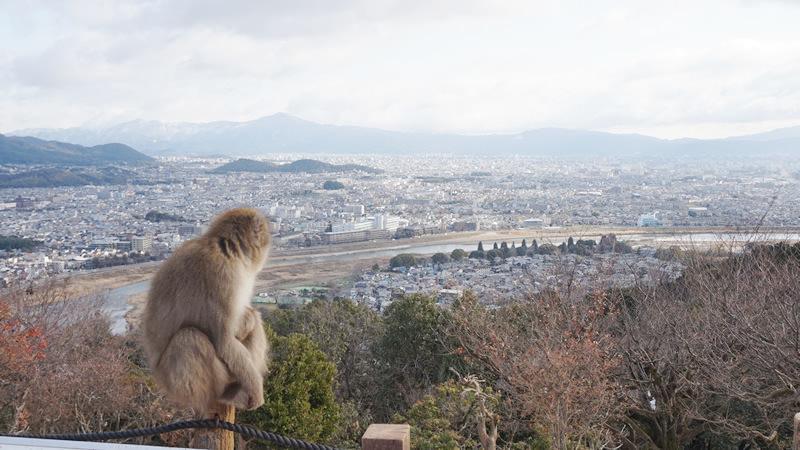 從瞭望台看出去的壯麗景色