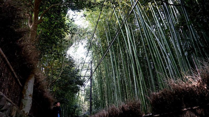 被竹林包圍享受自然之樂