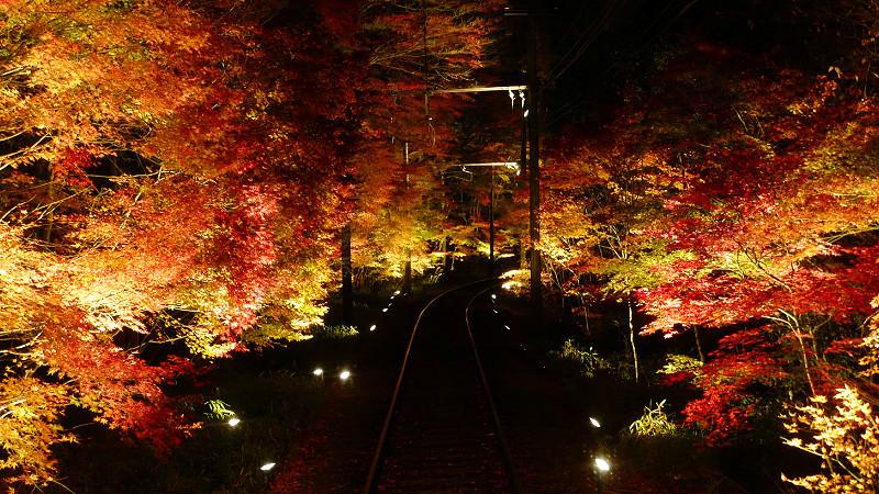 紅葉隧道點燈