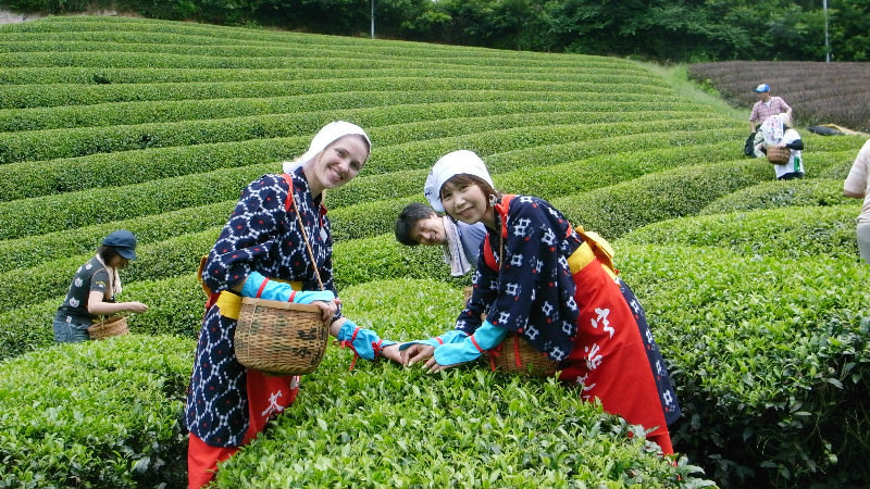 Experience tea picking