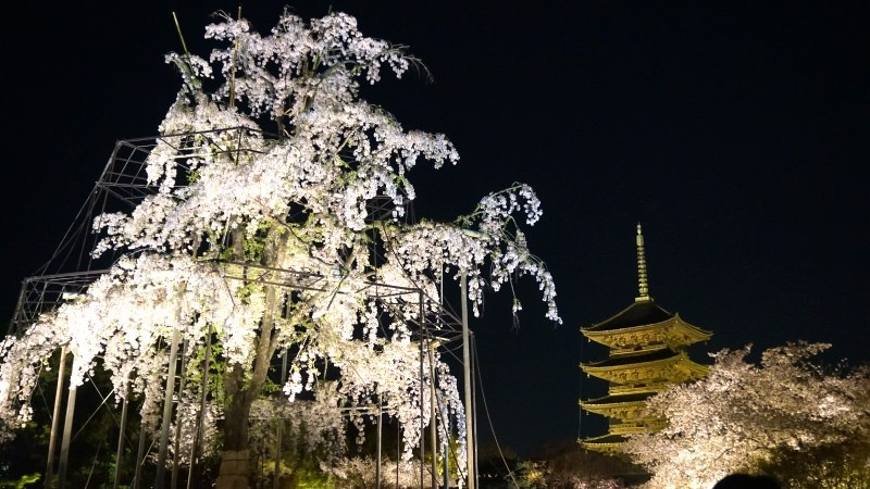 To-ji Temple illumination event