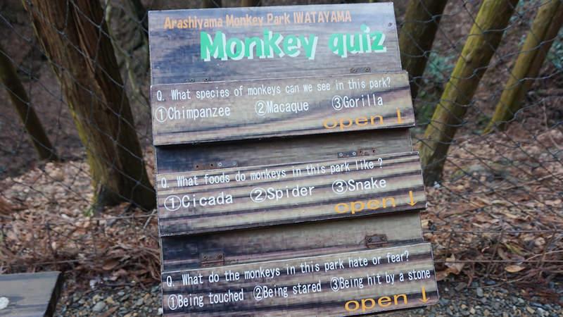 回答猴子小測驗