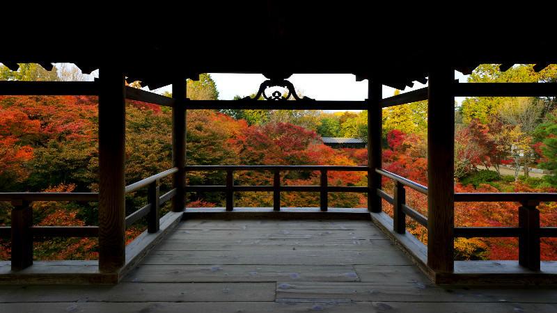 從通天橋欣賞美麗的風景