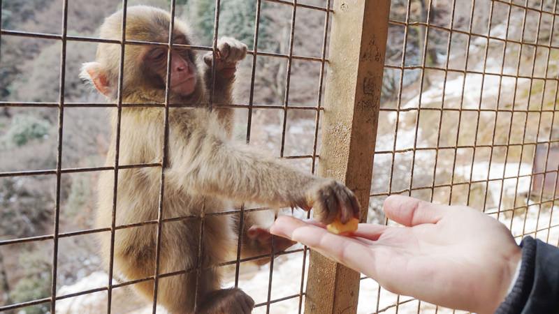 在休息小屋內餵食猴子