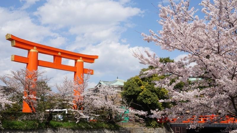 cherry blossoms at Heian Shrine