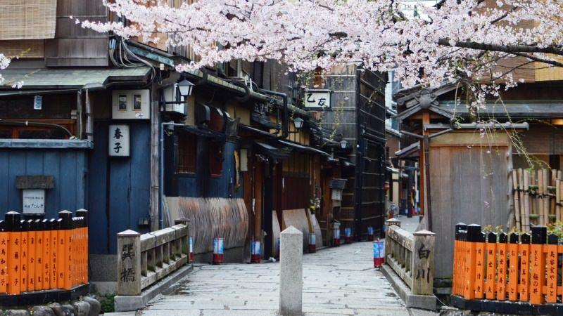 開滿櫻花的巽橋