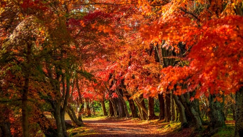 Walk on the path of autumn leaves
