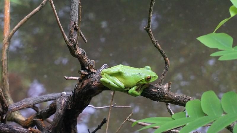 尋找青蛙的蹤跡