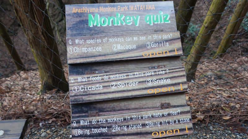 Take The Monkey Quiz