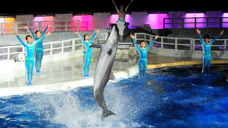 """Splash with dolphins!!"""