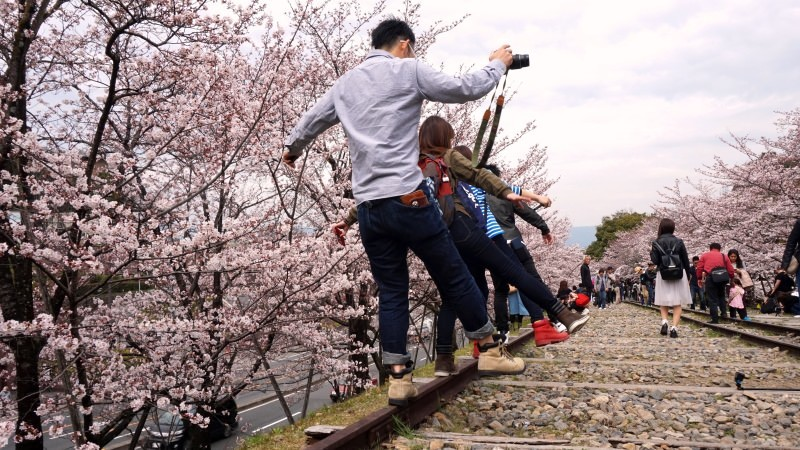 cherry blossom and people