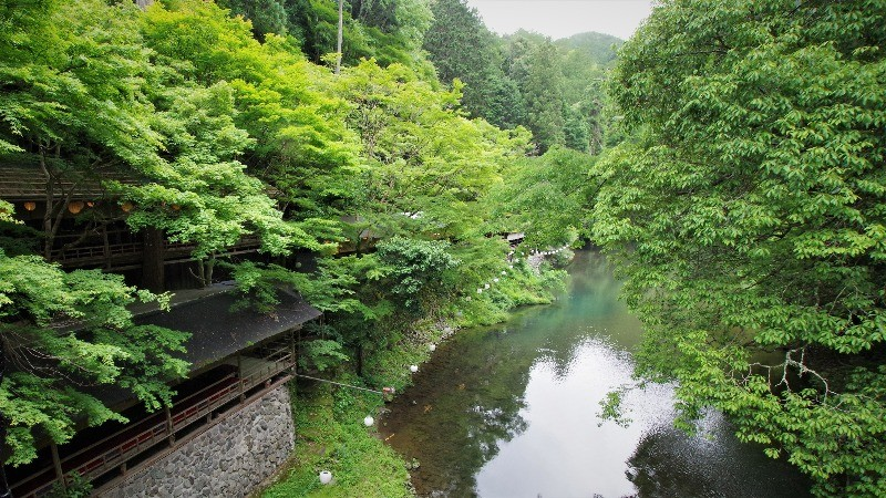Have a stroll around the area and enjoy the nature of Takao