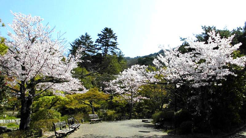Stroll in Maruyama Park