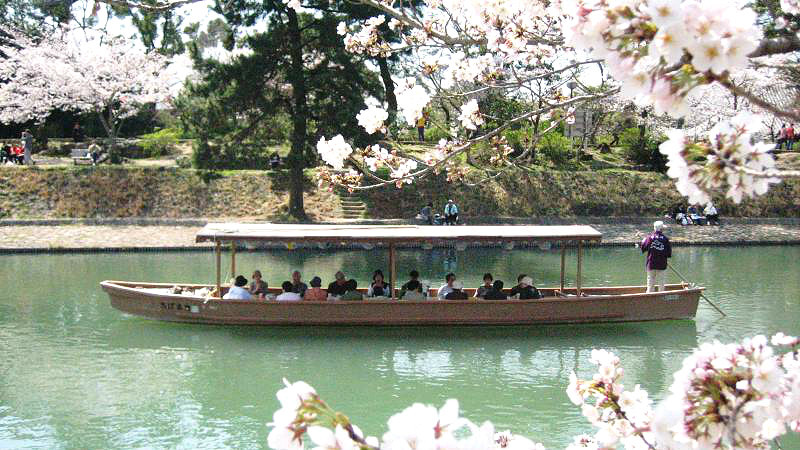 Enjoy the cherry blossoms leisurely from a pleasure barge