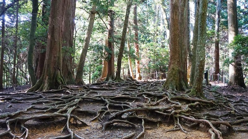 A Maze of Roots
