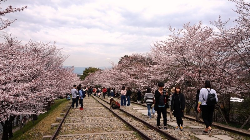You can freely walk on the rails which have cherry trees on both sides