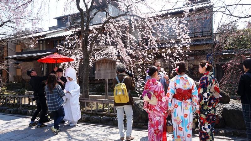 祗園白川是具有京都風的拍攝熱門景點