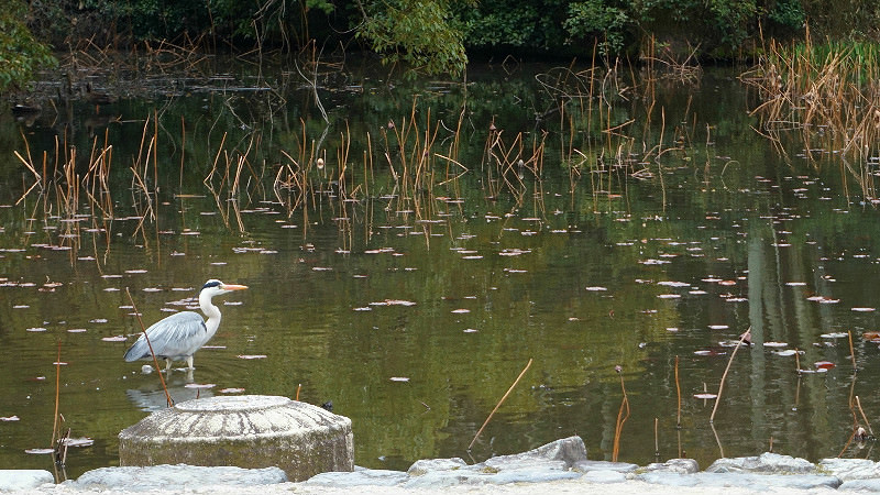 Herons And Waterfowls