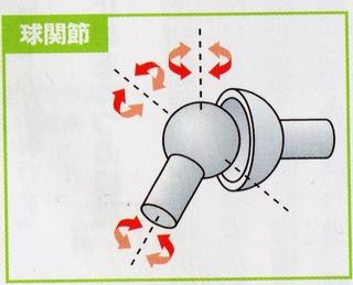 「球関節」の画像検索結果