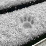 ネコさん、積雪を確認。