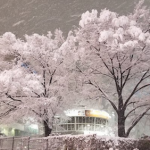 新宿駅東口に雪の花が咲く