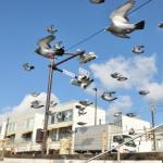風が強すぎて空中に止まっているように見える鳩が撮影される