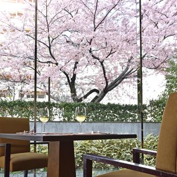 桜 シェラトン都ホテル東京