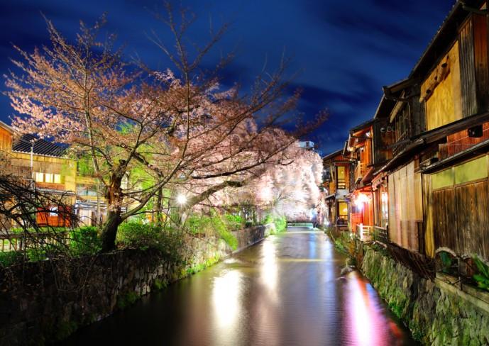 夜桜 ディナー