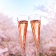 桜 スパークリングワイン