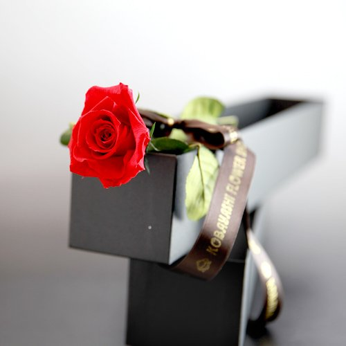 母の日 赤いバラ