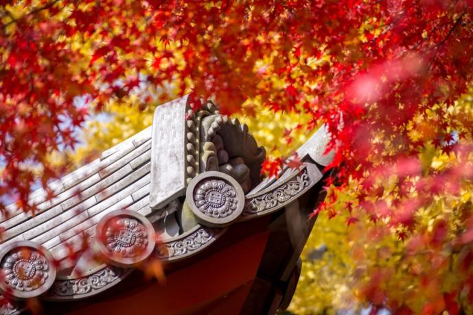 京都の紅葉名所でデート