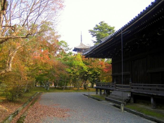 京都にある仁和寺の紅葉