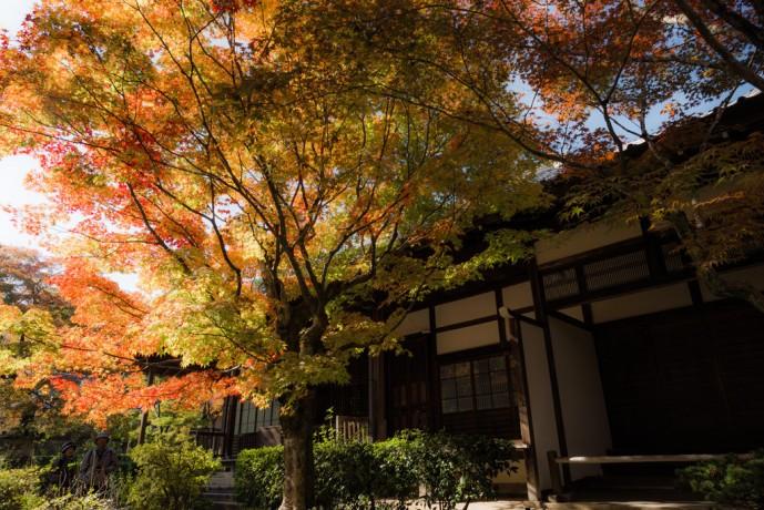 京都の常寂光寺で紅葉デート
