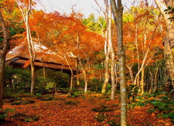 京都の祇王寺で紅葉デート
