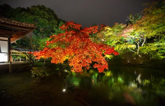 高台寺で紅葉デート