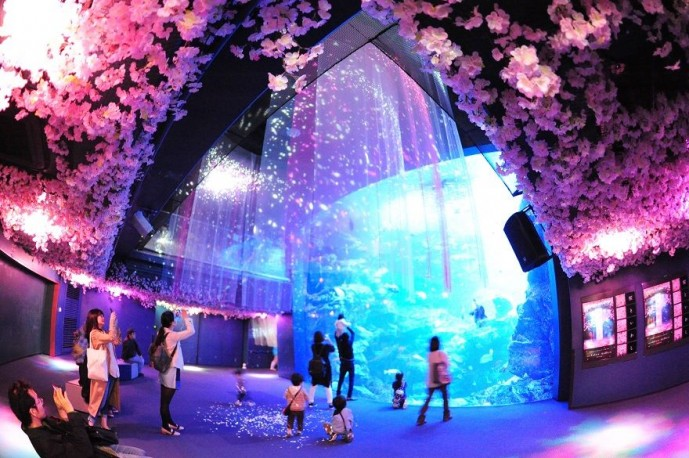 京都水族館 デート