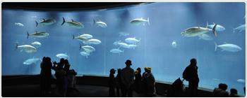 水族館デート 葛西