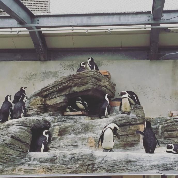 雨の日 サンシャイン水族館