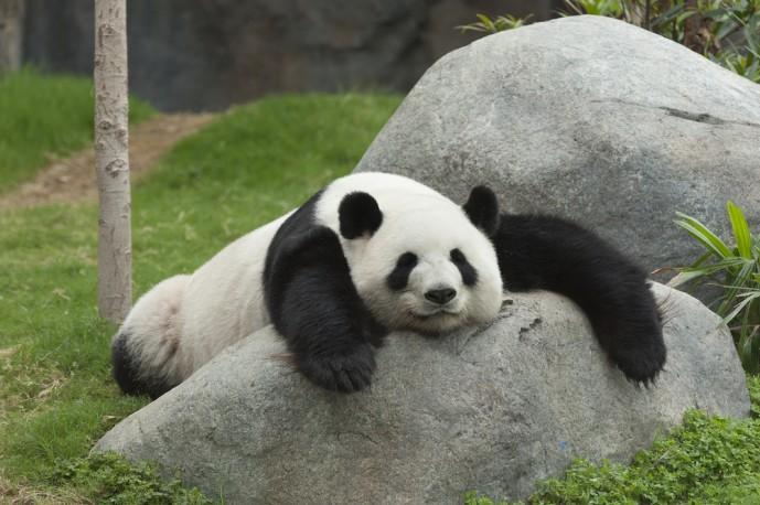 春デート 動物園