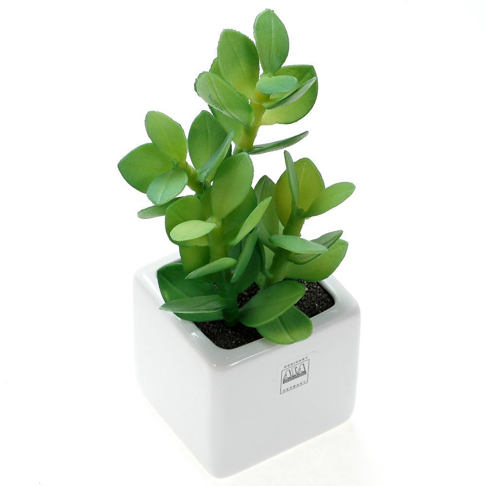 観葉植物 プレゼント