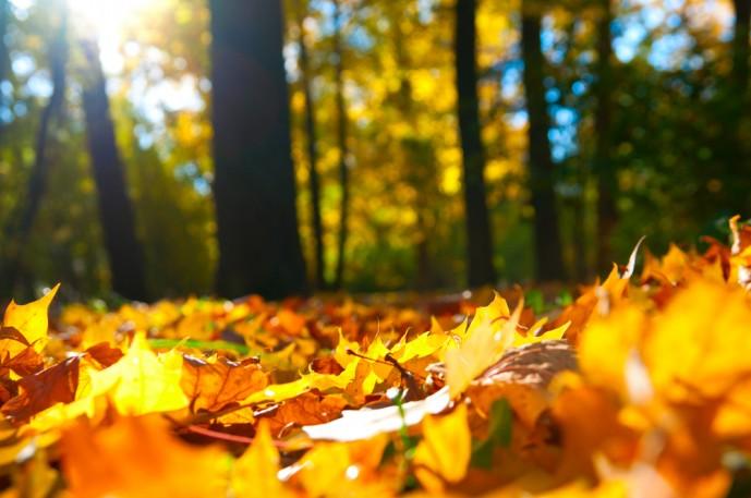 秋は紅葉狩りデート