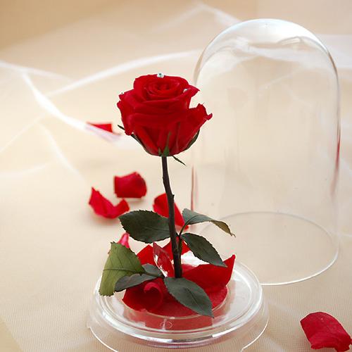 クリスマスプレゼントで贈りたいベルの薔薇