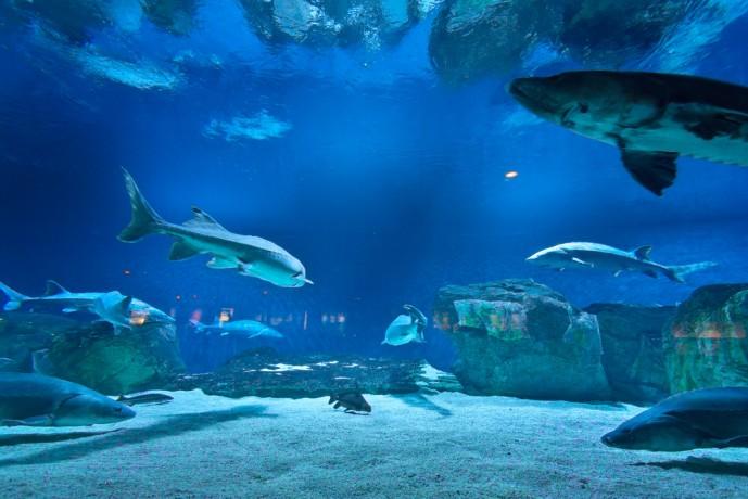 クリスマスに水族館デート