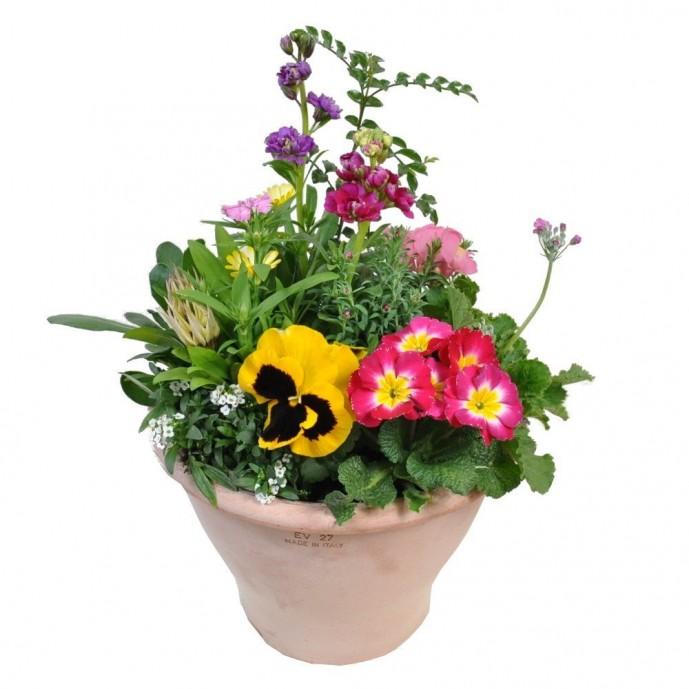 母の日に渡したいおしゃれな洋風鉢植えギフト