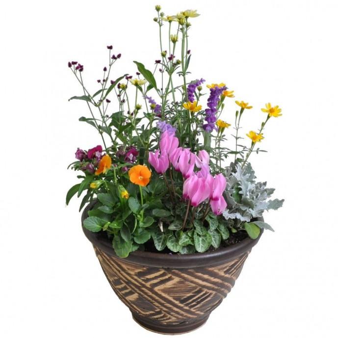 母の日に渡したいおしゃれな和風鉢植えギフト