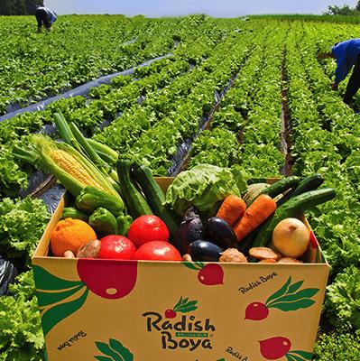 その季節で一番おいしい野菜・果物が届くらでぃっしゅぼーやの「ぱれっと」