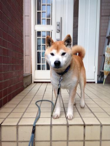 Kumiko Shimomura