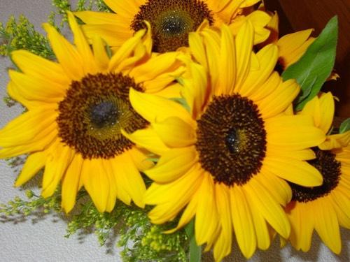 sunflowermeadow
