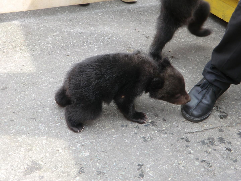熊画像(H26) (Large)